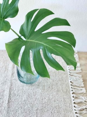 Monstera leht