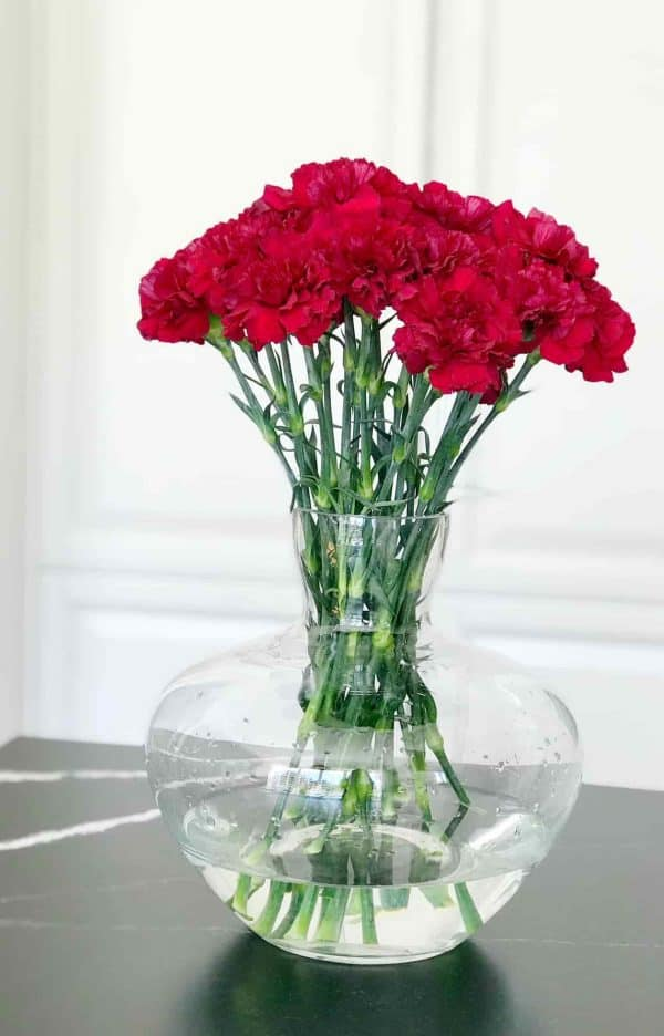 Carnation flowers red