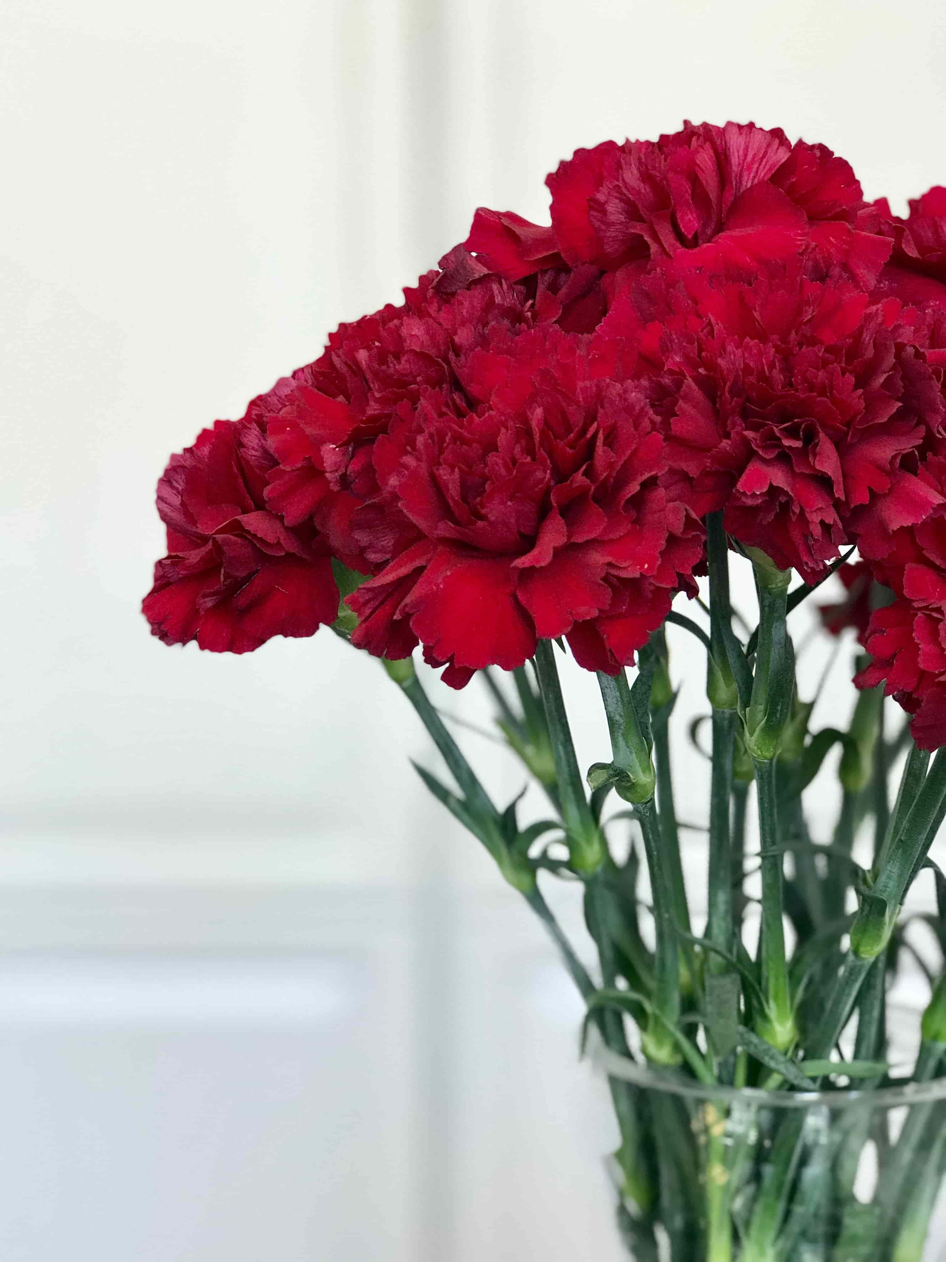 ce464ffea19 Punased nelgid - ajatu klassika. Studio Nelk - lillede ja toataimede ...