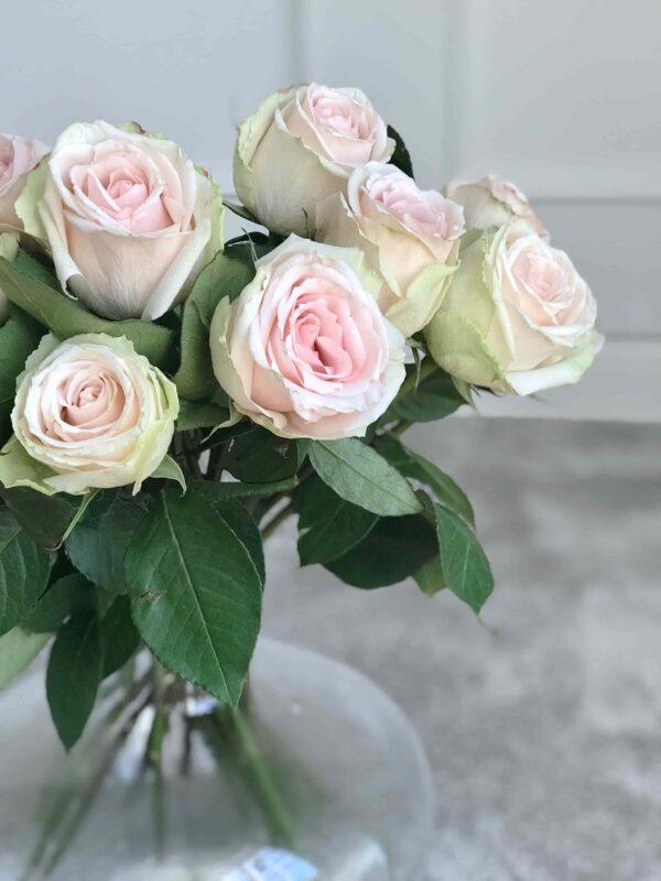 roosad-roosid