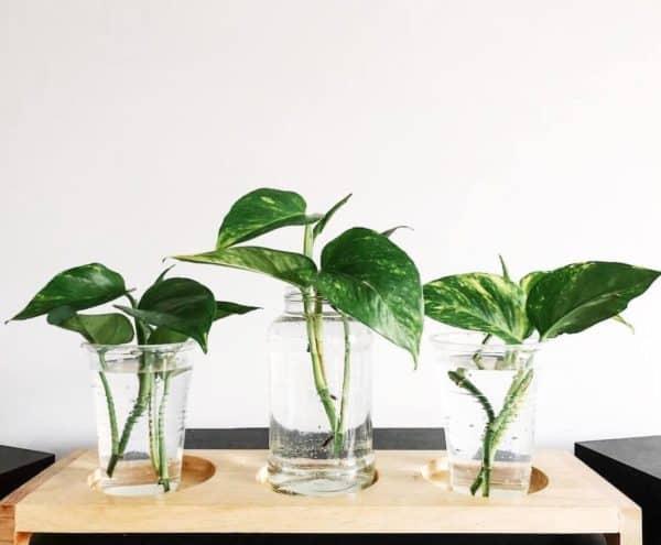 Taimede paljundamine