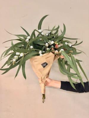 Eukalüpt pikaleheline, õite ja käbidega