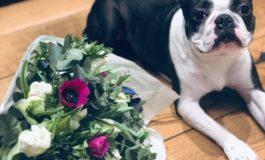 Lemmiklooma-sõbralikud lilled ja toataimed