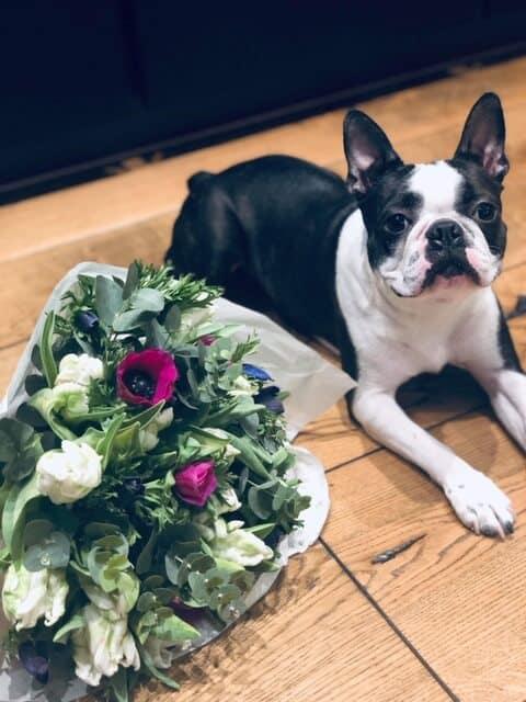 Lemmikloomasõbralikud lilled
