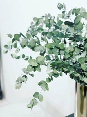 stabiliseeritud eukalüpt