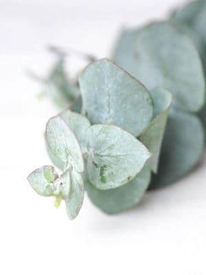 Eukalüpt – kauasäiliv ehk stabiliseeritud