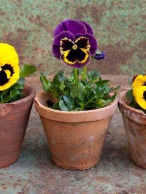 Lilleilu koju ja aeda